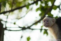 Los_Capuchin_12_13