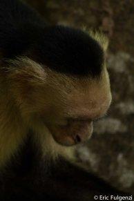 Los_Capuchin_21_13