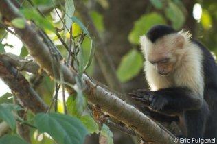 Los_Capuchin_33_13