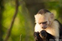 Los_Capuchin_41_13