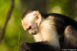 Los_Capuchin_42_13