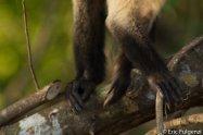 Los_Capuchin_43_13