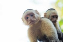 Los_Capuchin_51_13