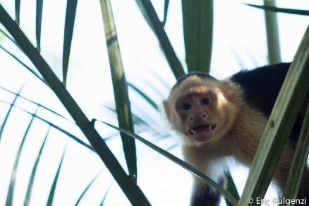Los_Capuchin_60_13
