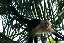 Los_Capuchin_62_13