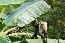 Los_Capuchin_66_13