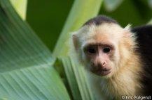 Los_Capuchin_69_13
