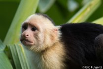 Los_Capuchin_70_13