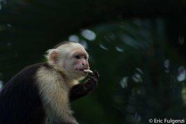 Los_Capuchin_76_13