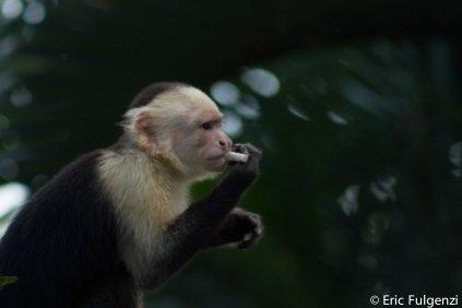 Los_Capuchin_78_13
