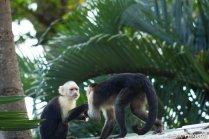 Los_Capuchin_82_13
