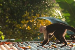 Los_Capuchin_8_13